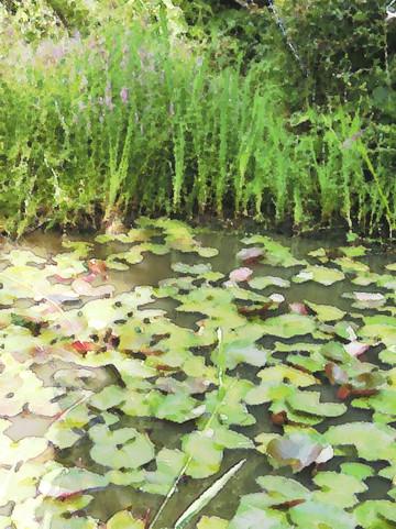 直島地中美術館横のモネの庭
