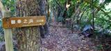 タマナ並木