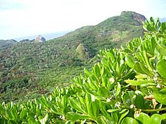 小富士で振り返って見た母島