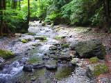 安谷川渓流